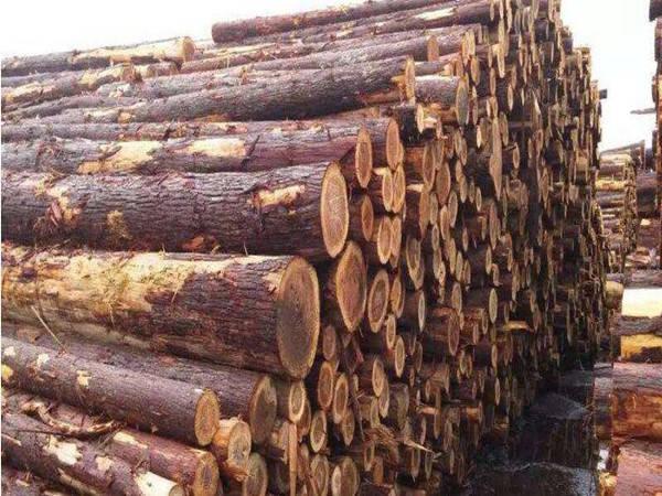 杉木桩开裂