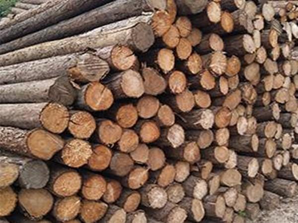 江苏松木桩和江苏杉木桩哪个好