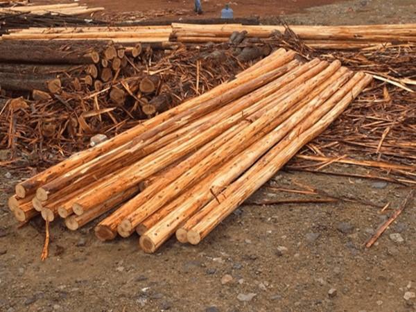 杉木桩批发