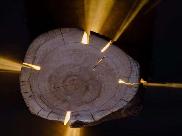 绿化杉木桩